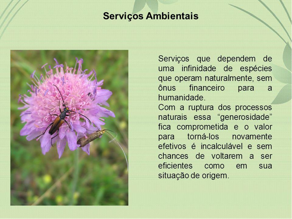 Serviços Ambientais Serviços que dependem de uma infinidade de espécies que operam naturalmente, sem ônus financeiro para a humanidade.