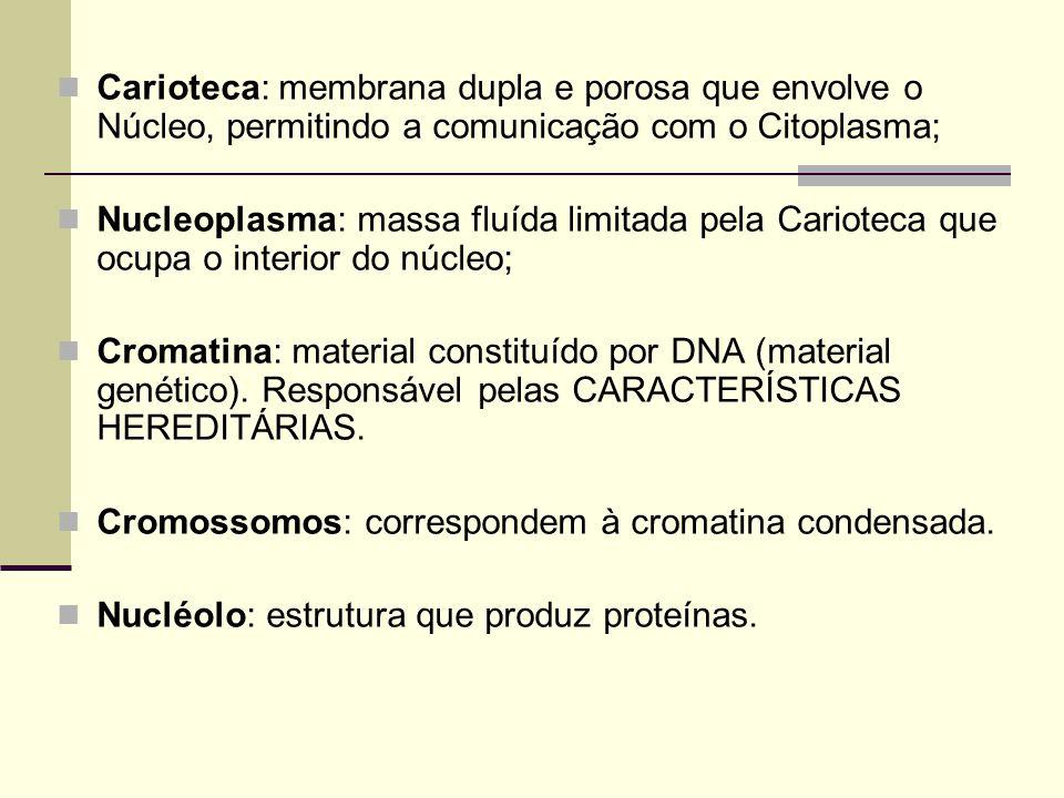 Carioteca: membrana dupla e porosa que envolve o Núcleo, permitindo a comunicação com o Citoplasma;
