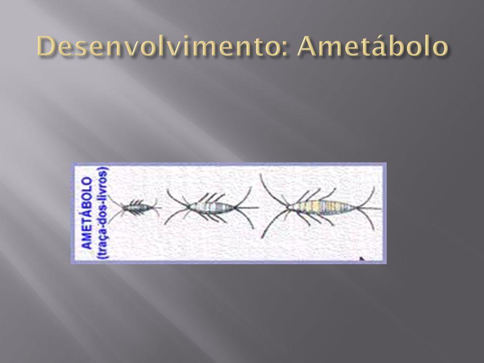 Desenvolvimento: Ametábolo