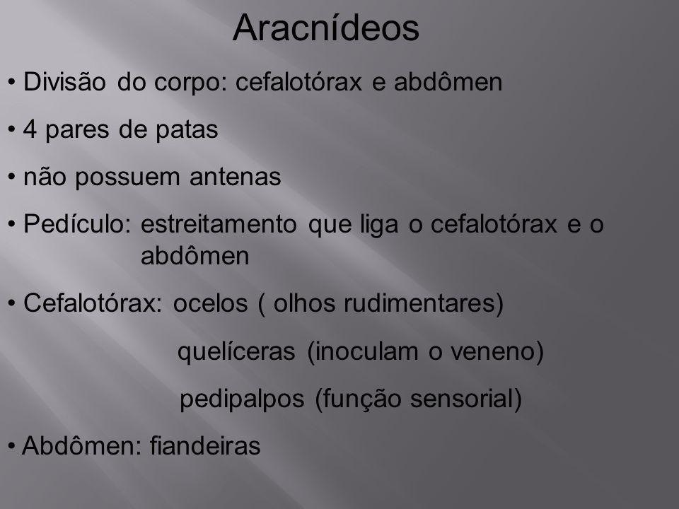 Aracnídeos Divisão do corpo: cefalotórax e abdômen 4 pares de patas