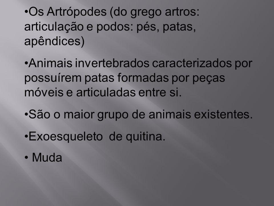 Os Artrópodes (do grego artros: articulação e podos: pés, patas, apêndices)