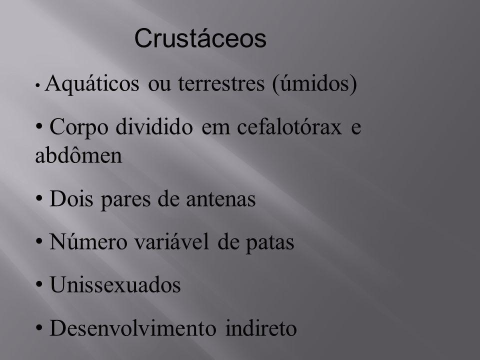 Crustáceos Corpo dividido em cefalotórax e abdômen