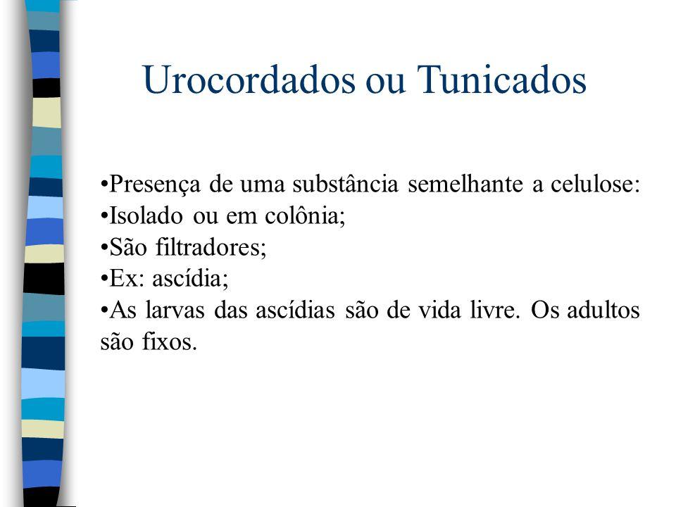Urocordados ou Tunicados