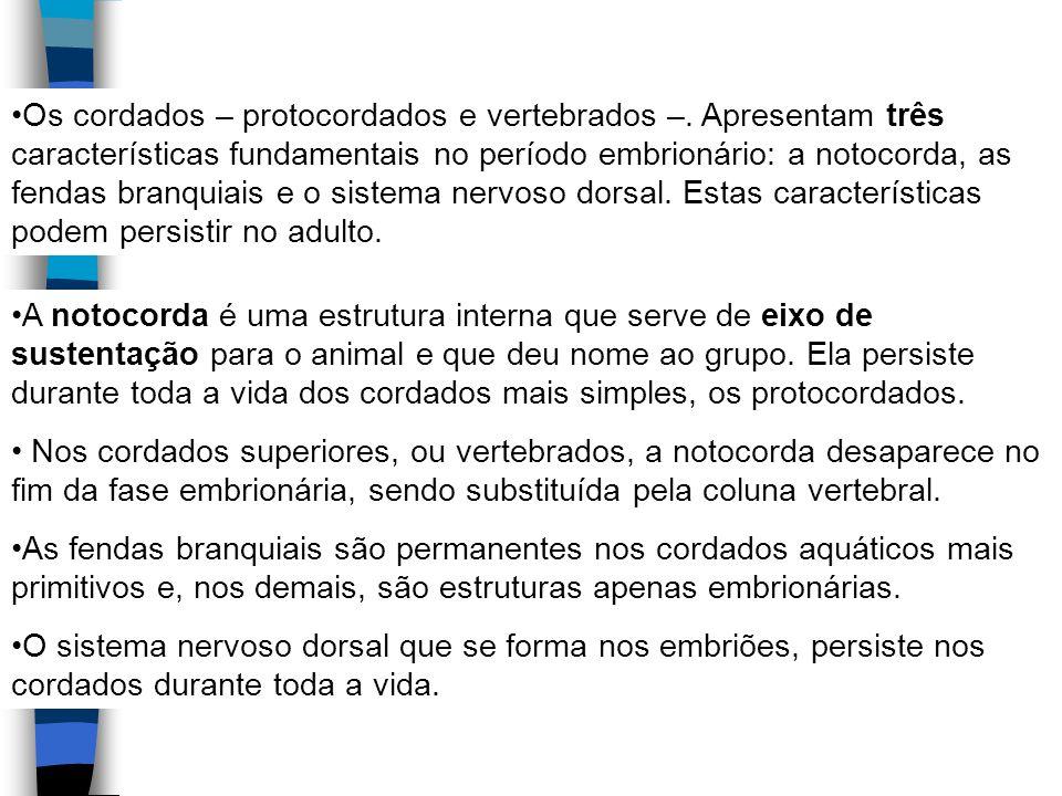Os cordados – protocordados e vertebrados –
