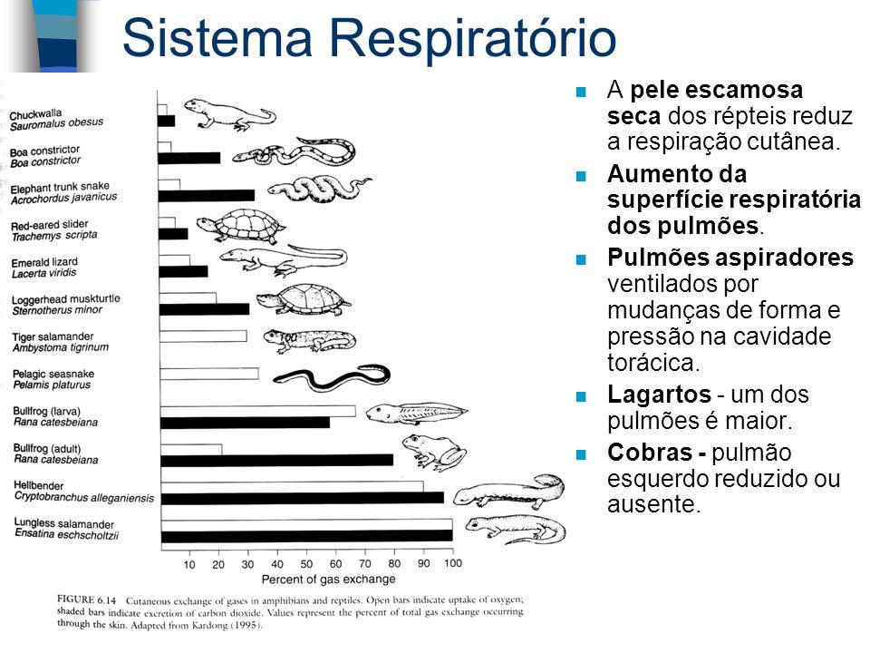 Sistema Respiratório A pele escamosa seca dos répteis reduz a respiração cutânea. Aumento da superfície respiratória dos pulmões.