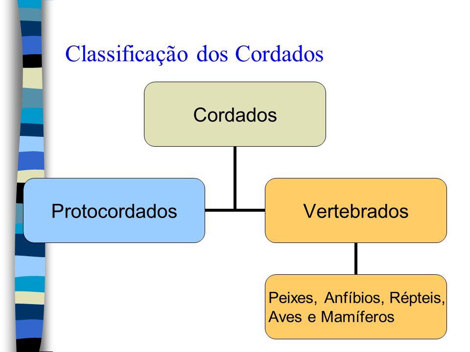 Classificação dos Cordados