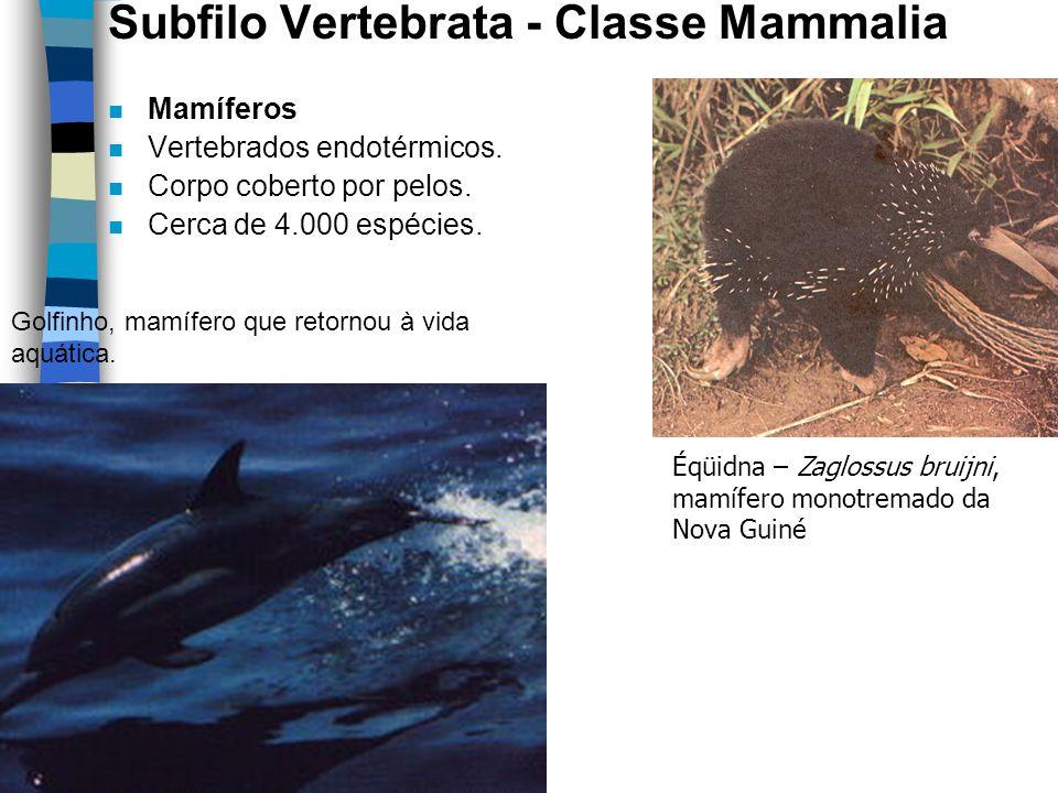 Subfilo Vertebrata - Classe Mammalia