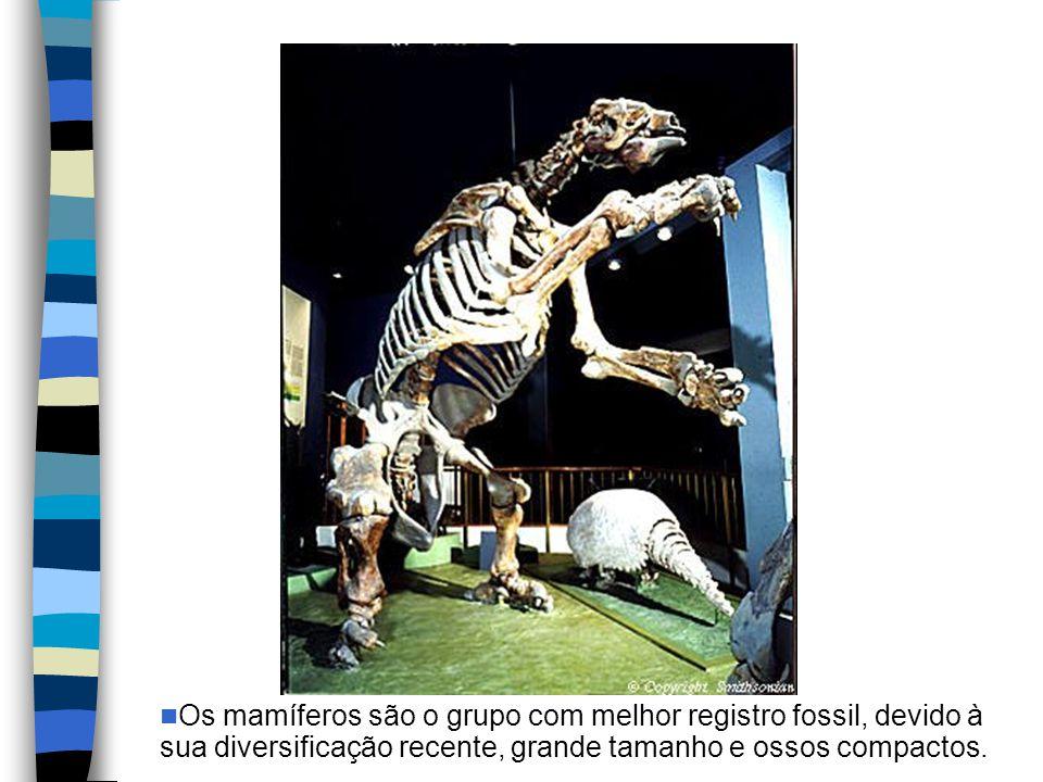 Os mamíferos são o grupo com melhor registro fossil, devido à sua diversificação recente, grande tamanho e ossos compactos.