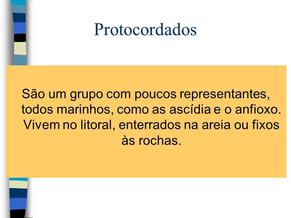 Protocordados