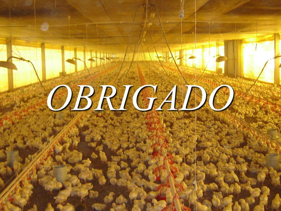 OBRIGADO OBRIGADA PELA ATENÇÃO !!!