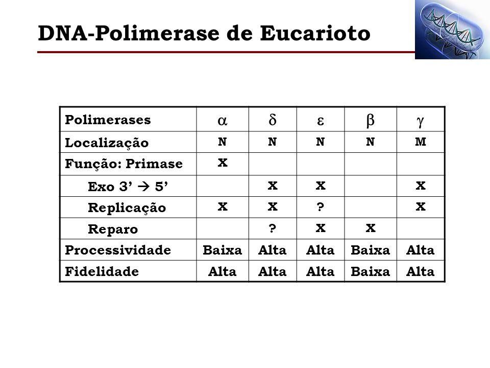 DNA-Polimerase de Eucarioto