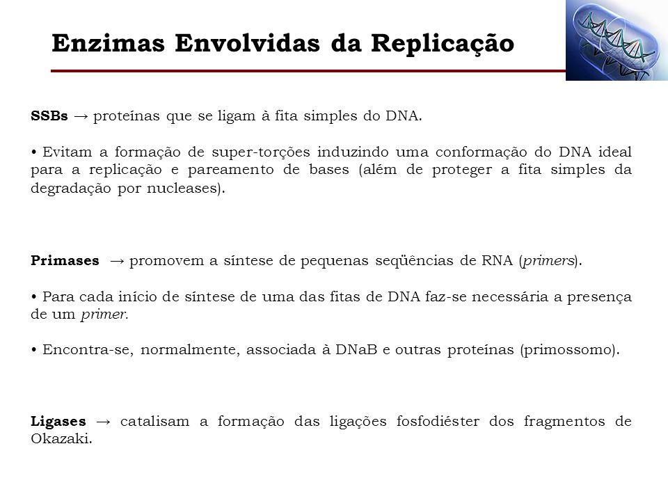 Enzimas Envolvidas da Replicação