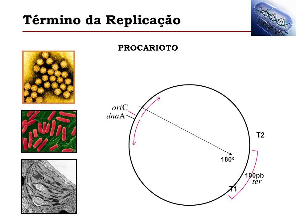 Término da Replicação PROCARIOTO 180o T2 100pb T1