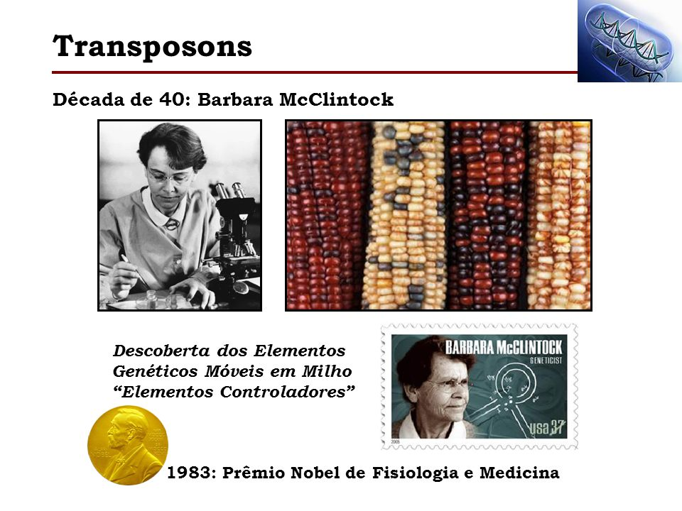 Transposons Década de 40: Barbara McClintock