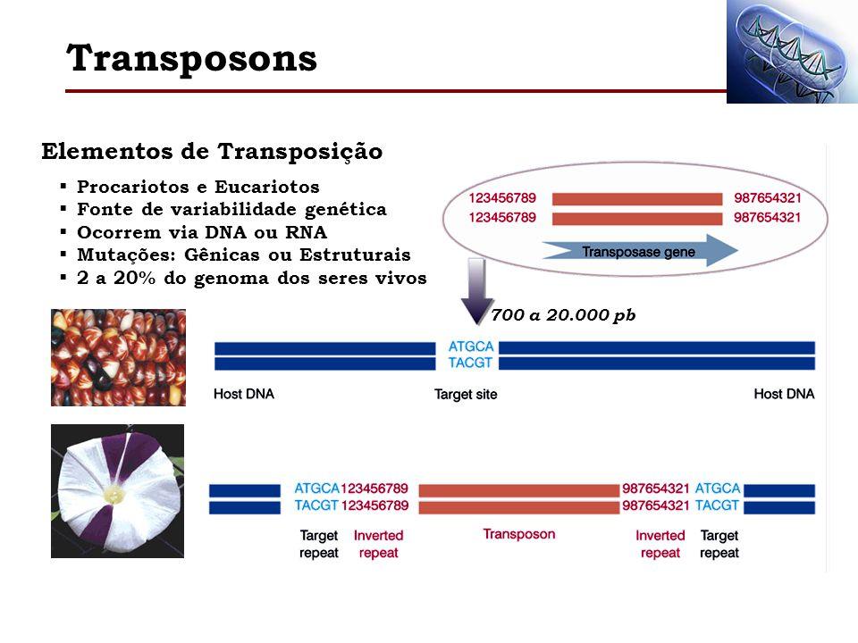 Transposons Elementos de Transposição Procariotos e Eucariotos