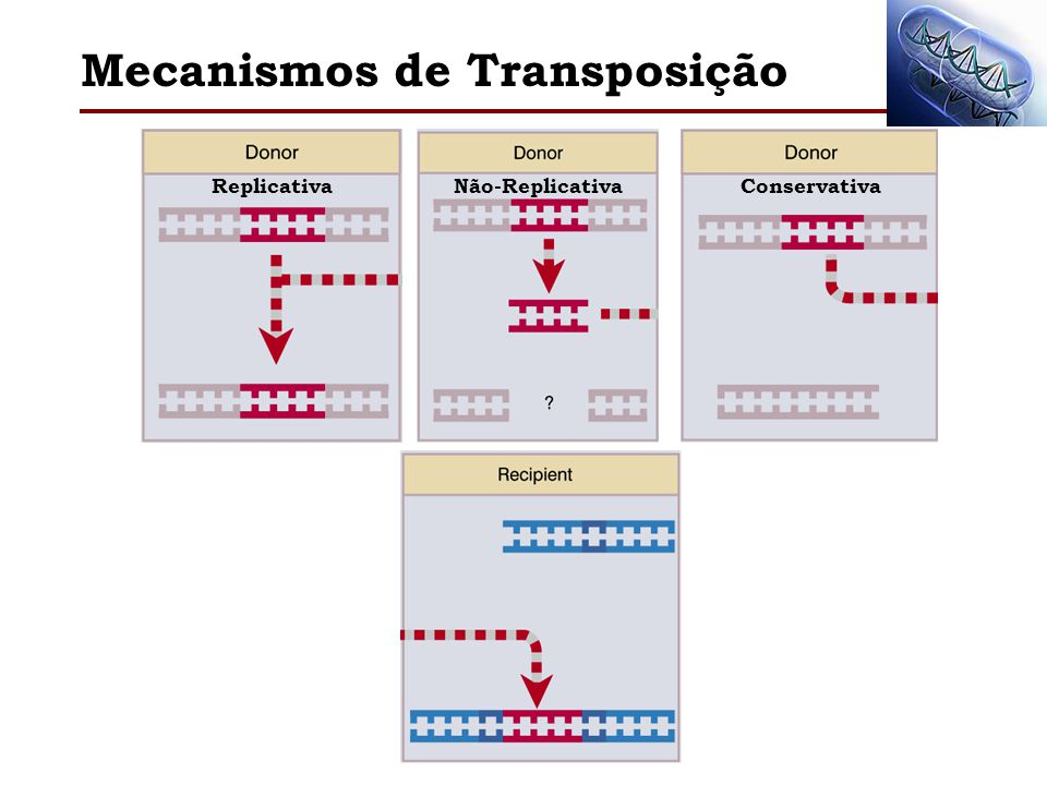 Mecanismos de Transposição