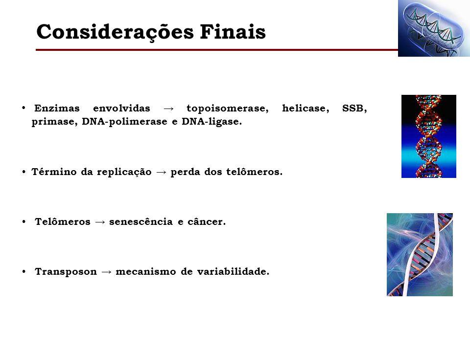 Considerações Finais Enzimas envolvidas → topoisomerase, helicase, SSB, primase, DNA-polimerase e DNA-ligase.