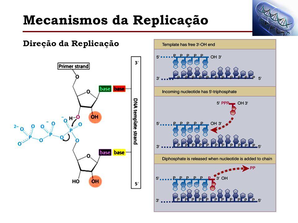 Mecanismos da Replicação