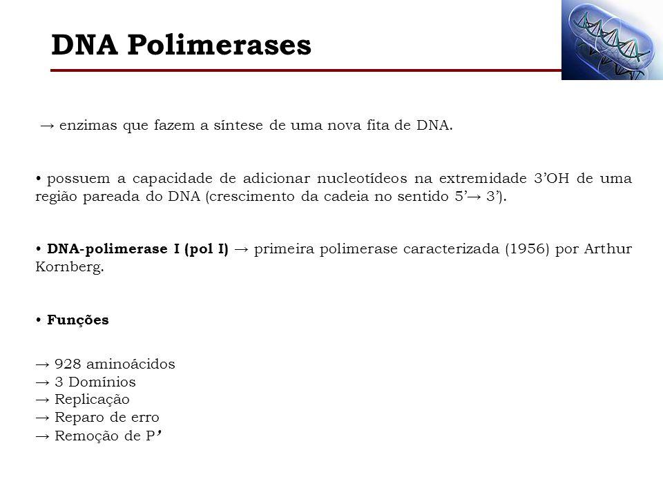 DNA Polimerases → enzimas que fazem a síntese de uma nova fita de DNA.
