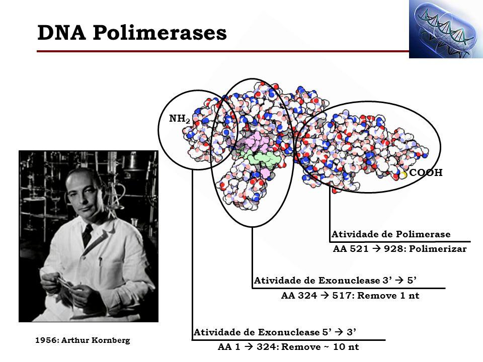DNA Polimerases NH2 COOH Atividade de Polimerase