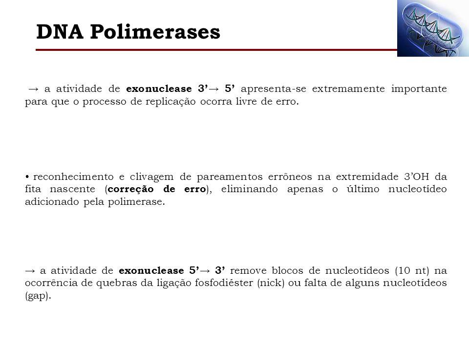 DNA Polimerases → a atividade de exonuclease 3'→ 5' apresenta-se extremamente importante para que o processo de replicação ocorra livre de erro.