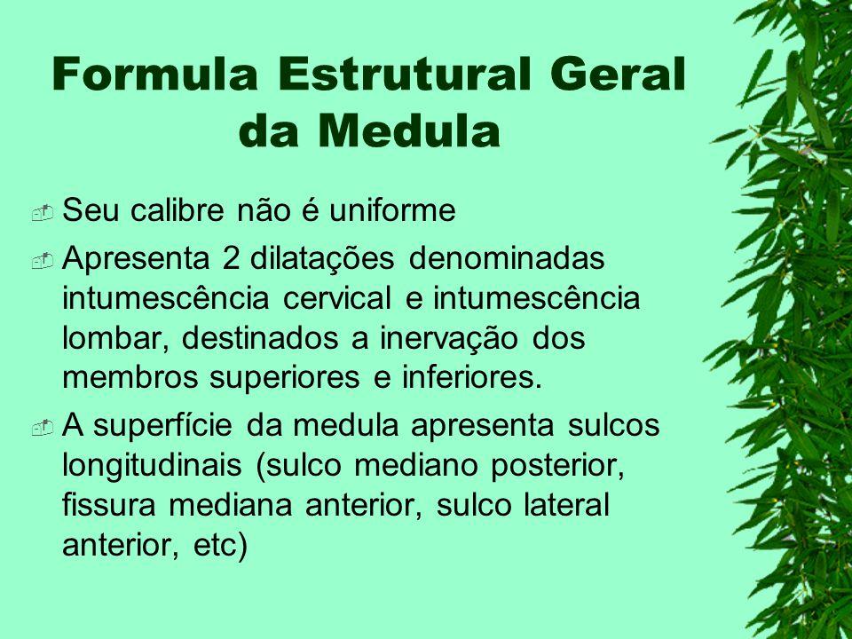Formula Estrutural Geral da Medula