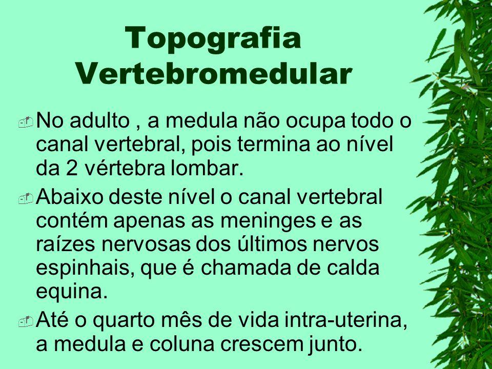 Topografia Vertebromedular