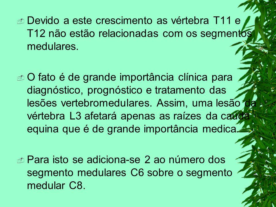 Devido a este crescimento as vértebra T11 e T12 não estão relacionadas com os segmentos medulares.