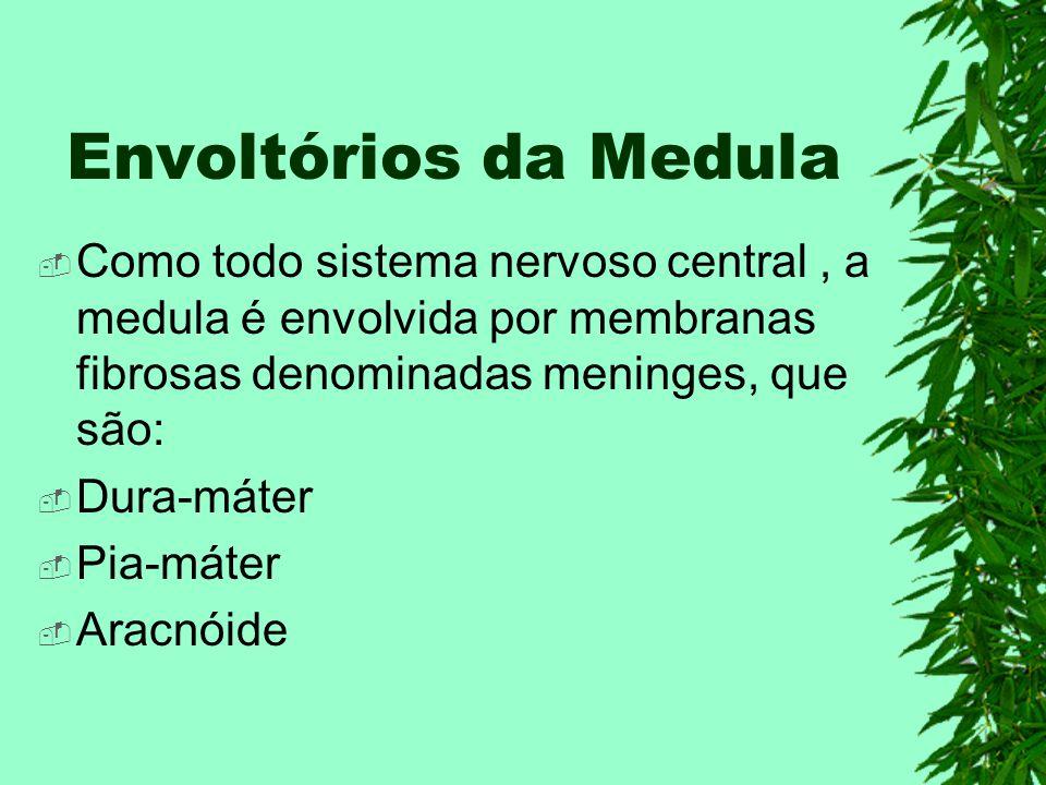 Envoltórios da Medula Como todo sistema nervoso central , a medula é envolvida por membranas fibrosas denominadas meninges, que são: