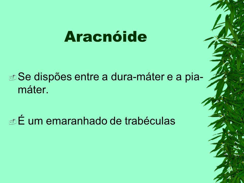 Aracnóide Se dispões entre a dura-máter e a pia-máter.