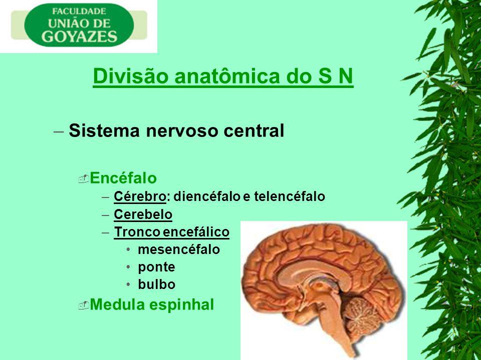 Divisão anatômica do S N