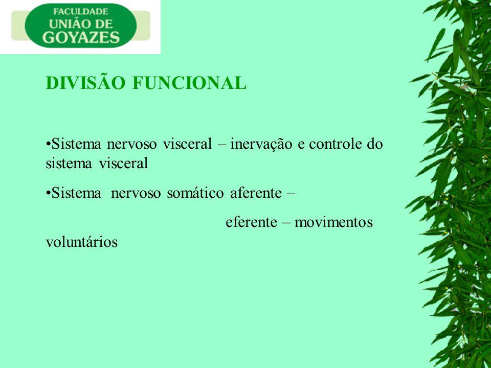 DIVISÃO FUNCIONAL Sistema nervoso visceral – inervação e controle do sistema visceral. Sistema nervoso somático aferente –
