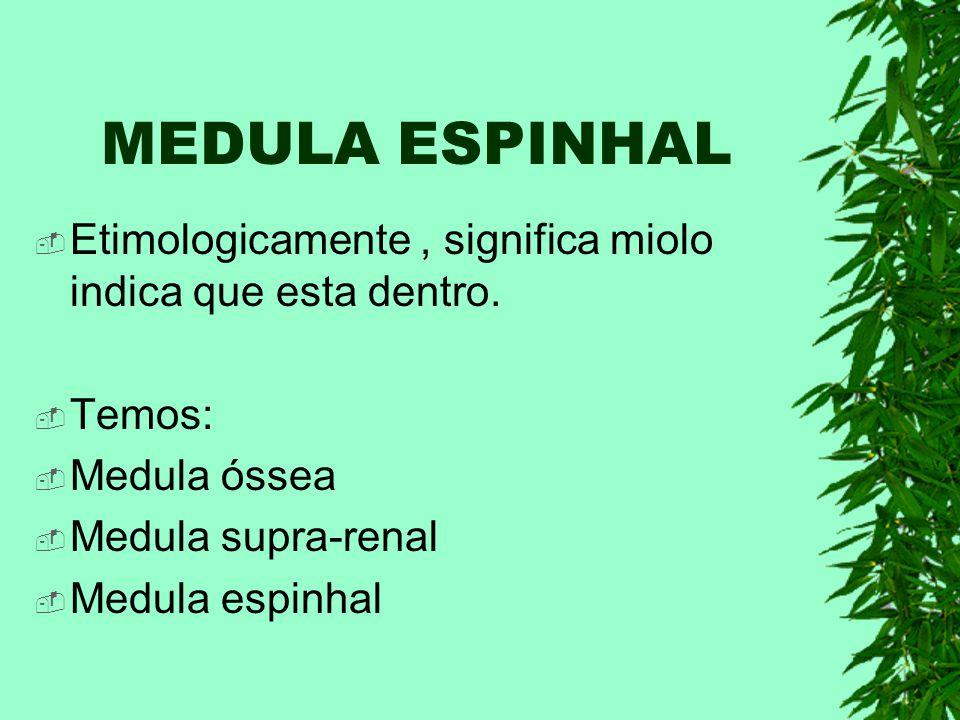 MEDULA ESPINHAL Etimologicamente , significa miolo indica que esta dentro. Temos: Medula óssea. Medula supra-renal.