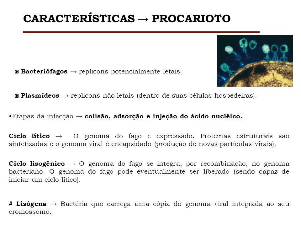 CARACTERÍSTICAS → PROCARIOTO