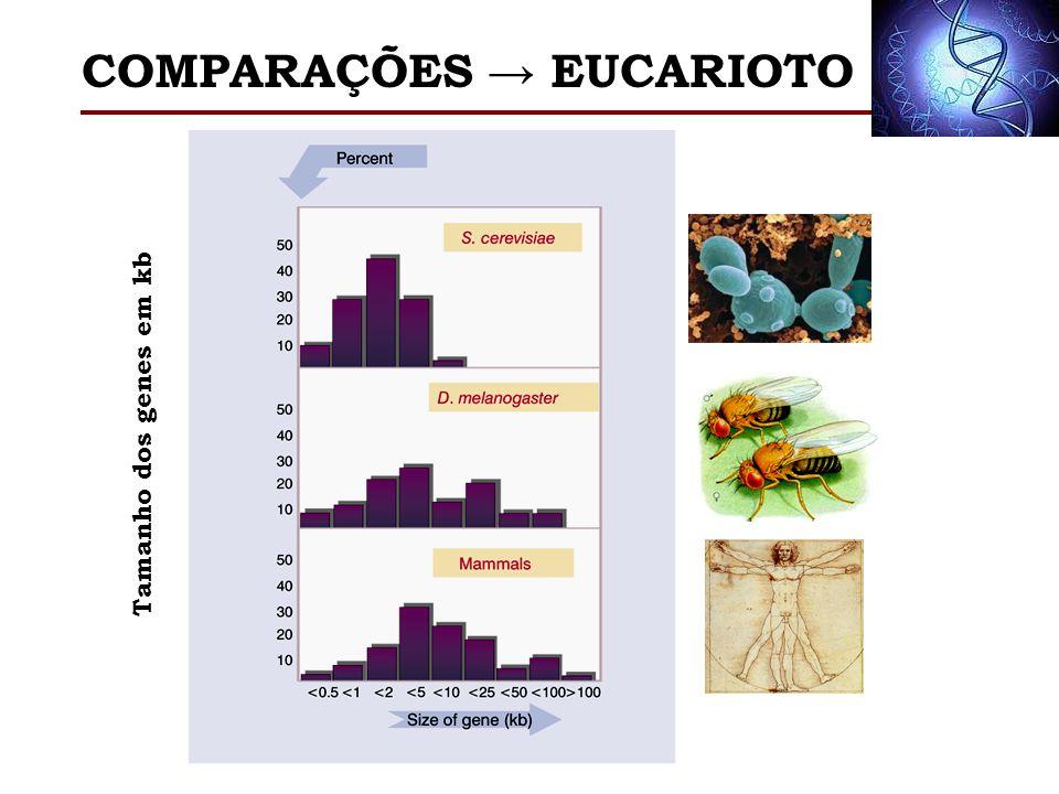 COMPARAÇÕES → EUCARIOTO