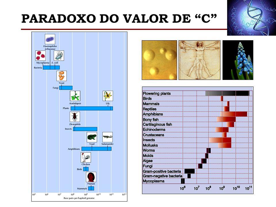 PARADOXO DO VALOR DE C