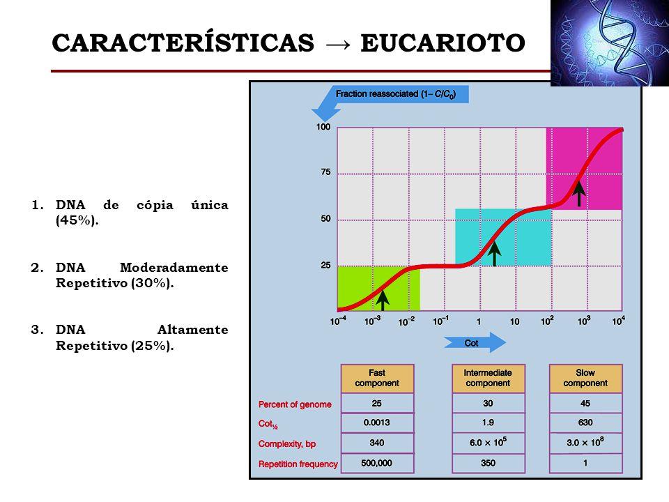 CARACTERÍSTICAS → EUCARIOTO