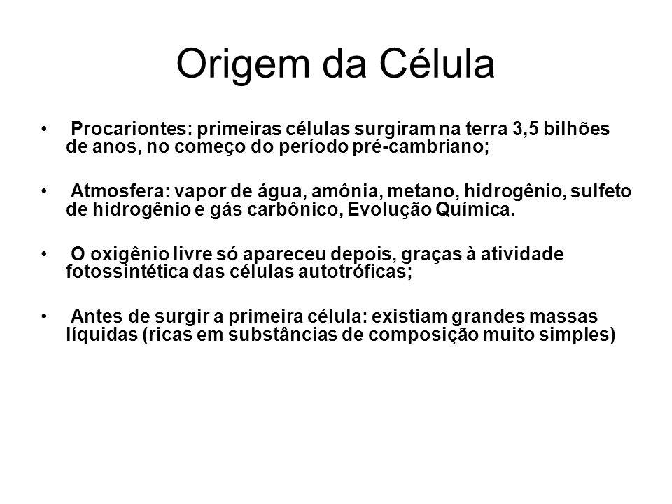 Origem da Célula Procariontes: primeiras células surgiram na terra 3,5 bilhões de anos, no começo do período pré-cambriano;