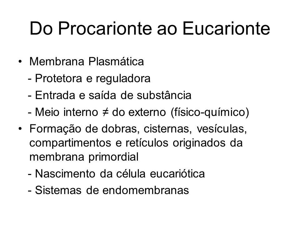 Do Procarionte ao Eucarionte