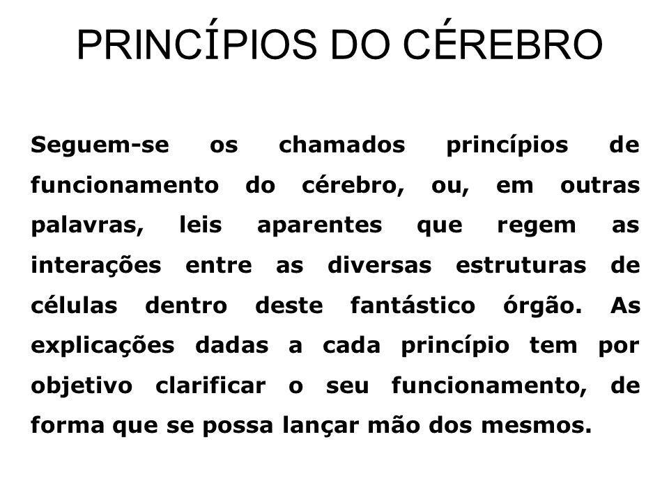 PRINCÍPIOS DO CÉREBRO