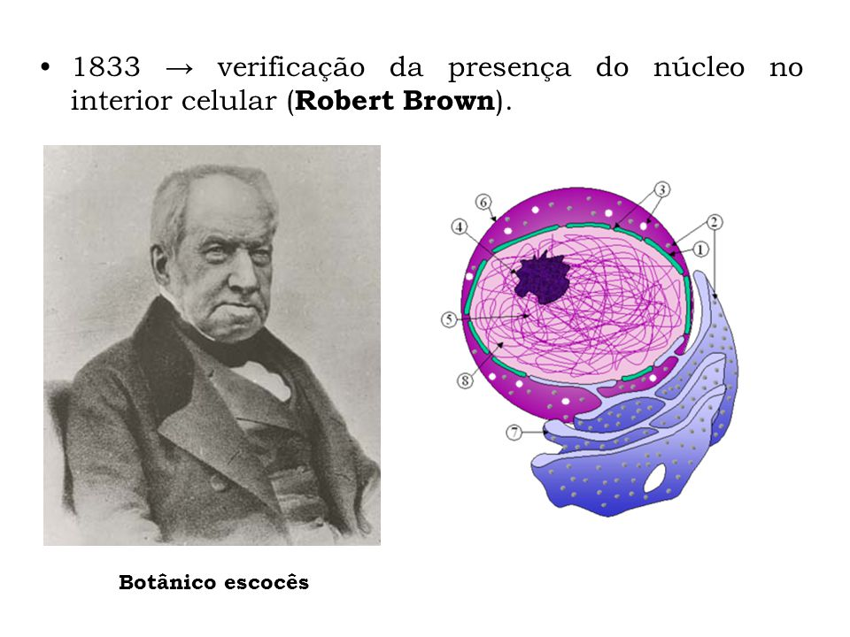 1833 → verificação da presença do núcleo no interior celular (Robert Brown).