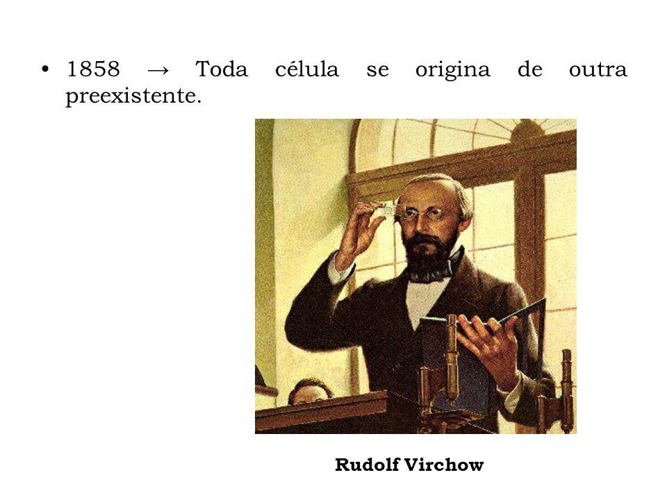 1858 → Toda célula se origina de outra preexistente.