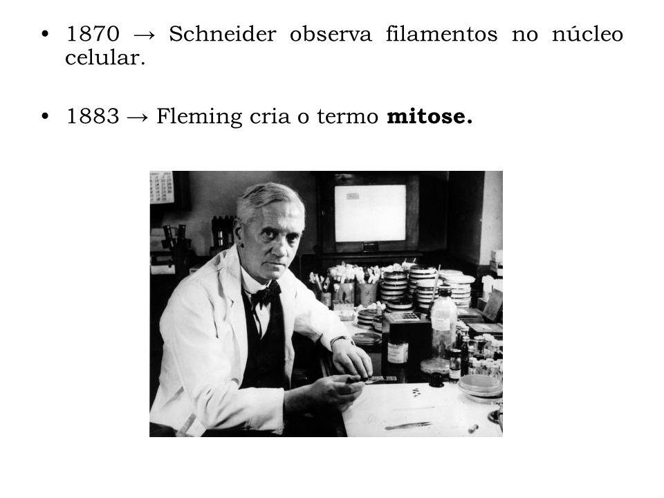 1870 → Schneider observa filamentos no núcleo celular.