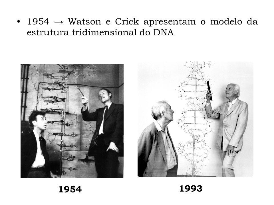 1954 → Watson e Crick apresentam o modelo da estrutura tridimensional do DNA