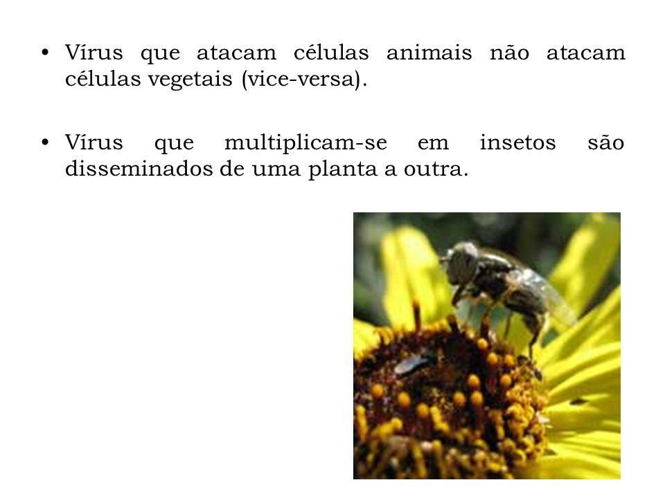 Vírus que atacam células animais não atacam células vegetais (vice-versa).