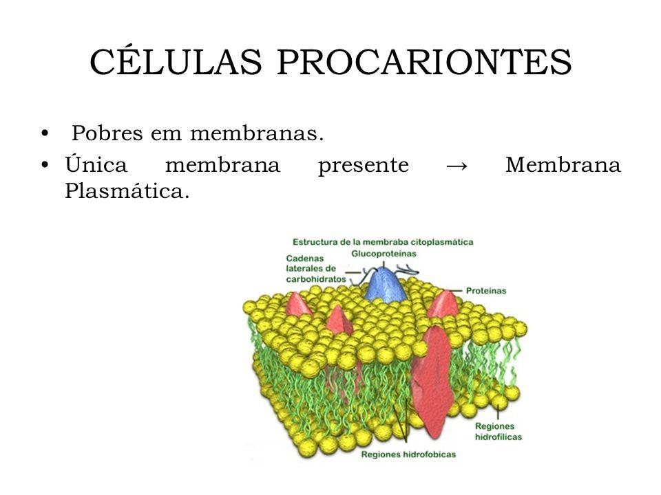 CÉLULAS PROCARIONTES Pobres em membranas.