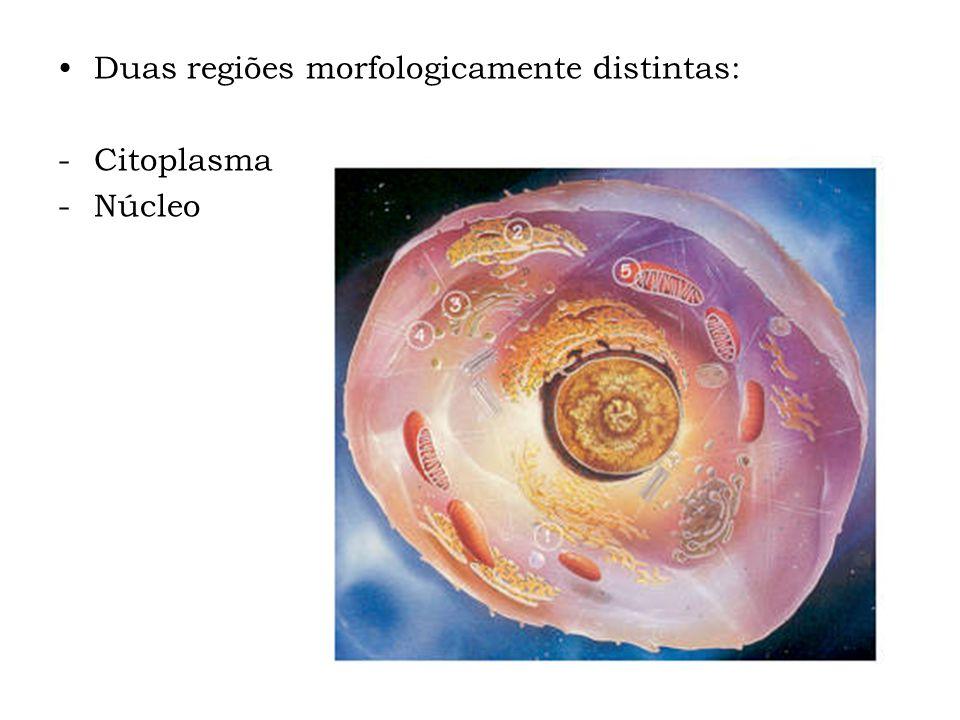 Duas regiões morfologicamente distintas: