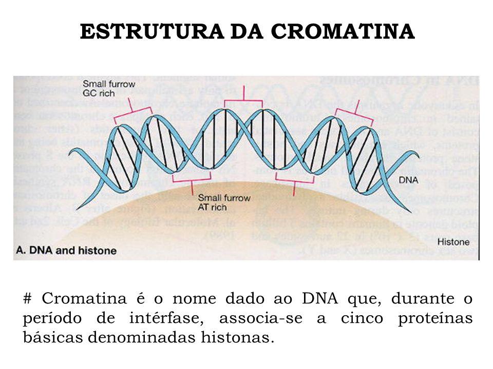 ESTRUTURA DA CROMATINA