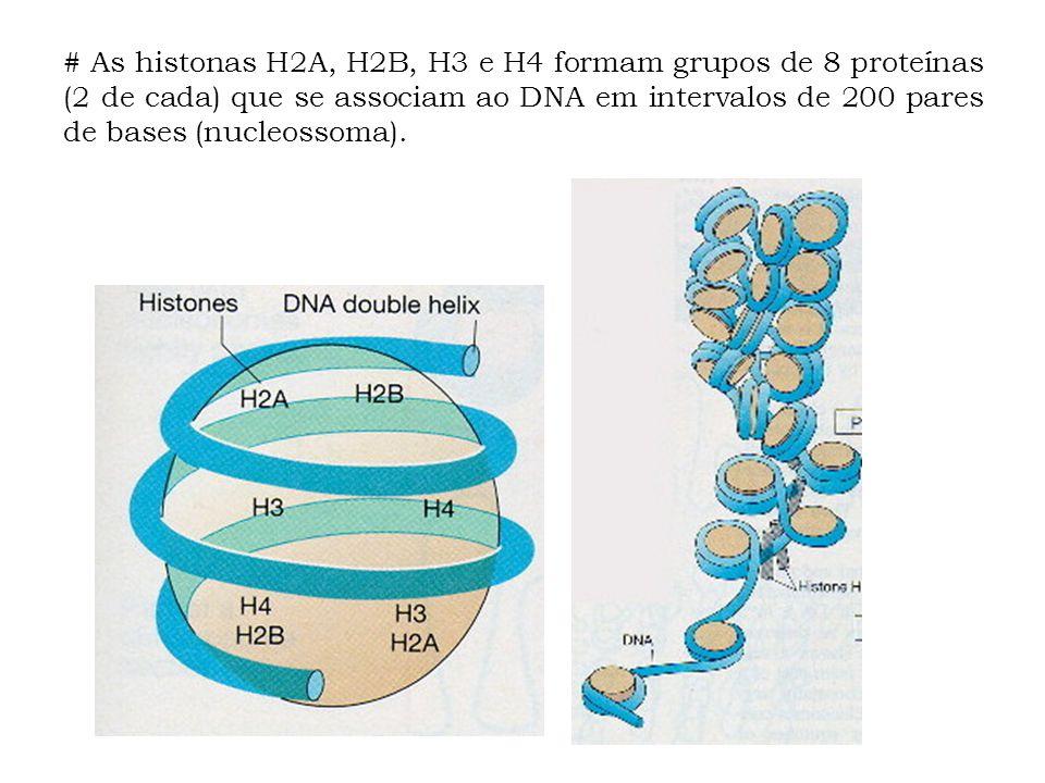 # As histonas H2A, H2B, H3 e H4 formam grupos de 8 proteínas (2 de cada) que se associam ao DNA em intervalos de 200 pares de bases (nucleossoma).