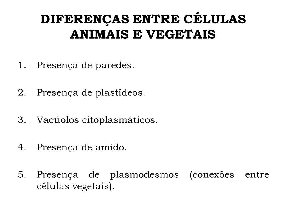 DIFERENÇAS ENTRE CÉLULAS ANIMAIS E VEGETAIS